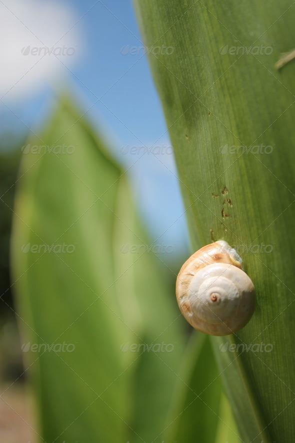 snail-climbing